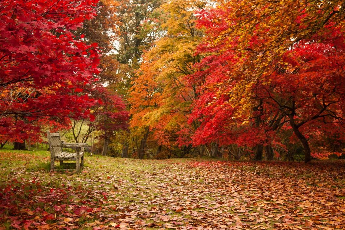 Bodnant Garden in Autumn