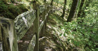 Torrent Walk